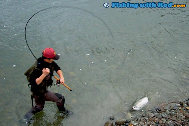 Those picky silvers fishing with rod for Salmon fishing tackle setup