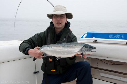 Small coho salmon
