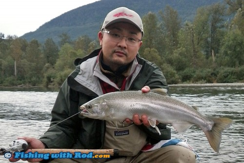 Chilliwack River wild coho salmon