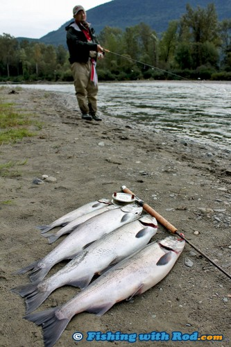 Fall salmon fishing in Chilliwack River