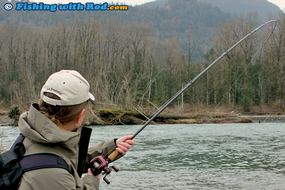 Fighting a Chilliwack River winter steelhead