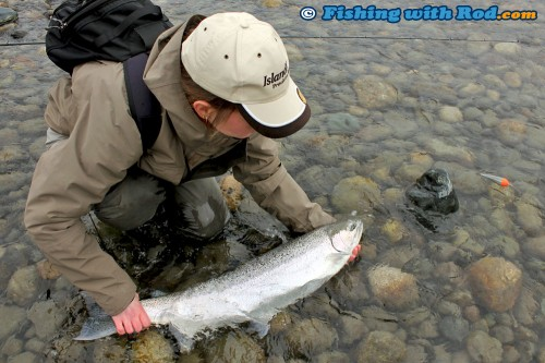 Landing a Chilliwack River winter steelhead