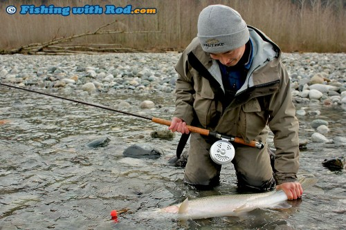 Releasing a Chilliwack River steelhead