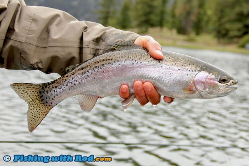 Another beautiful rainbow trout from Onion Lake