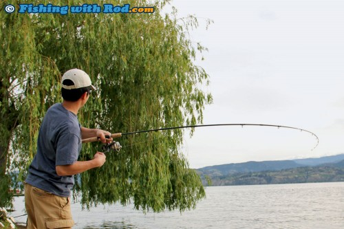 Fighting an Okanagan Lake carp