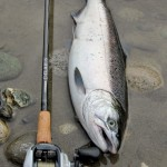Chilliwack River Hatchery Coho Salmon