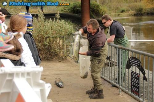 K.E.E.P.S. volunteer Ross Davies showcasing a chum salmon