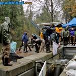 Collecting Chum Salmon Broods