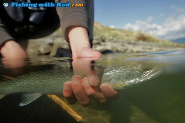 Cutthroat Trout Underwater Photograph