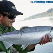 Big Fraser River coho salmon
