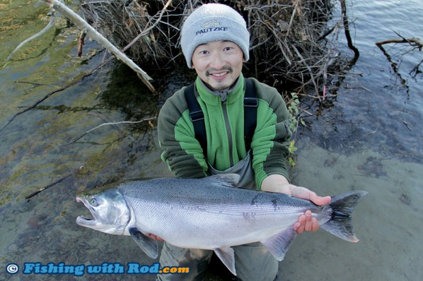 Big Coho Salmon from the Fraser Valley BC