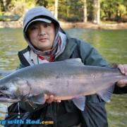 A Big Wild Coho Salmon
