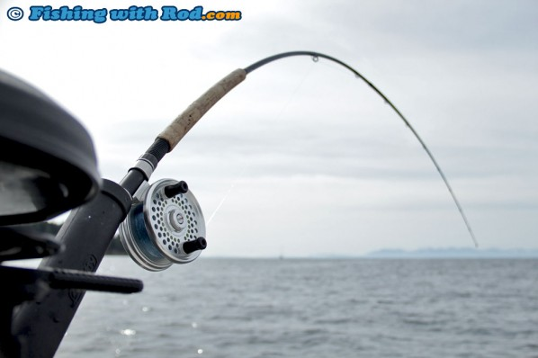 Islander Reel and Shimano Convergence for Salmon Trolling