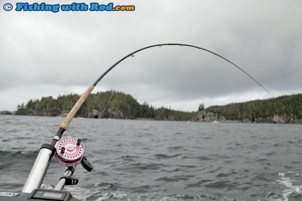 Islander Mooching Reels and Shimano Rods are Standard Setups for Salmon Trolling