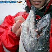 An Injured Knuckle while Fishing for Chinook Salmon