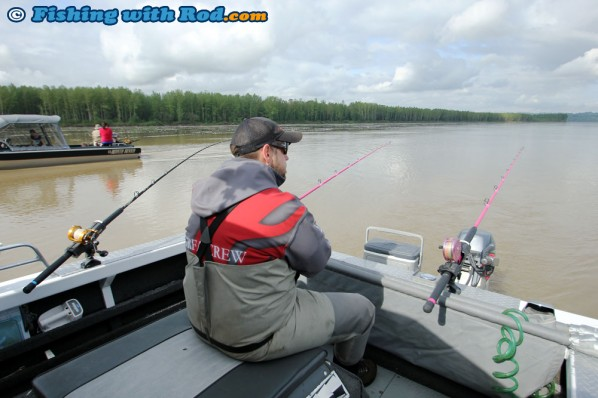 Chad Awaits for the Big Fraser River Sturgeon