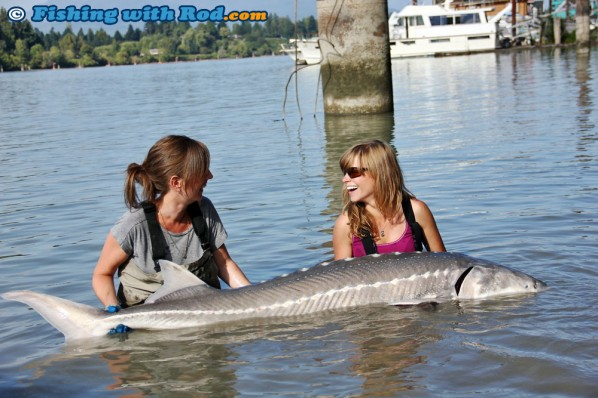 Lower Fraser white sturgeon caught by Nina and Kitty.