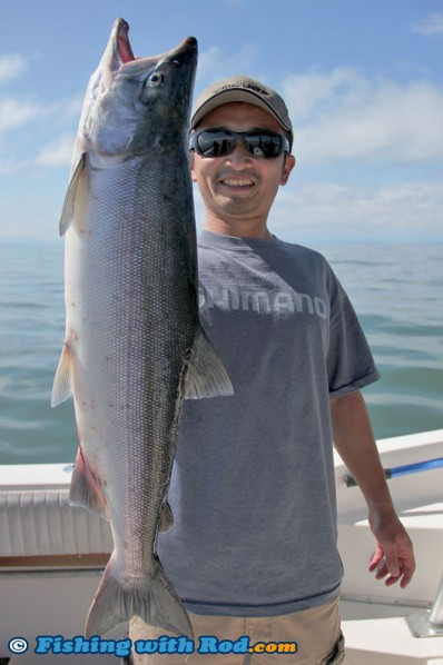 Nice Fraser River Sockeye Salmon