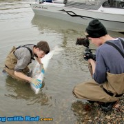 Alex's first big white sturgeon
