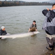 Carl and Alex's biggest sturgeon, photo by Carl Smith