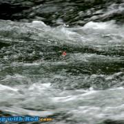 Seeking Steelhead in Pocket Water