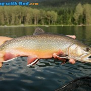 Ross Lake brook trout