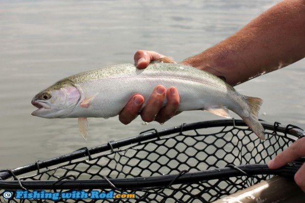 Tunkwa Lake Rainbow Trout