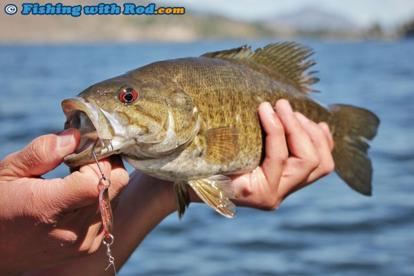 Smallmouth Bass Caught on Gibbs Croc Spoon
