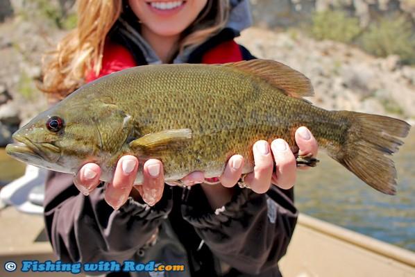 Nice Skaha Lake Smallmouth Bass