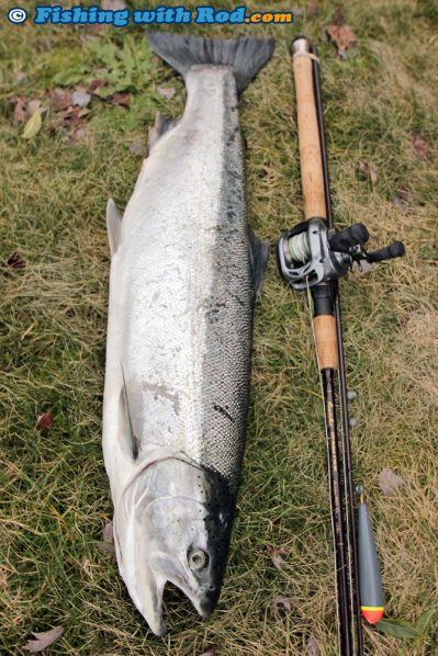 A Beautiful Vedder River Steelhead