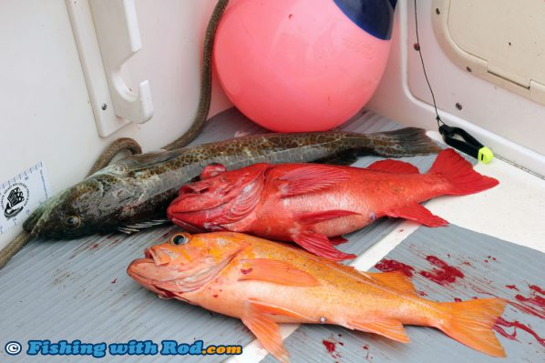 A Mix Bag of Lingcod and Rockfish