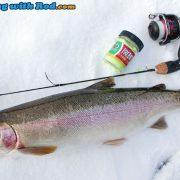 Nice Rainbow Trout!