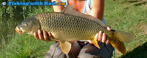 Common carp in water for What age do you need a fishing license in texas
