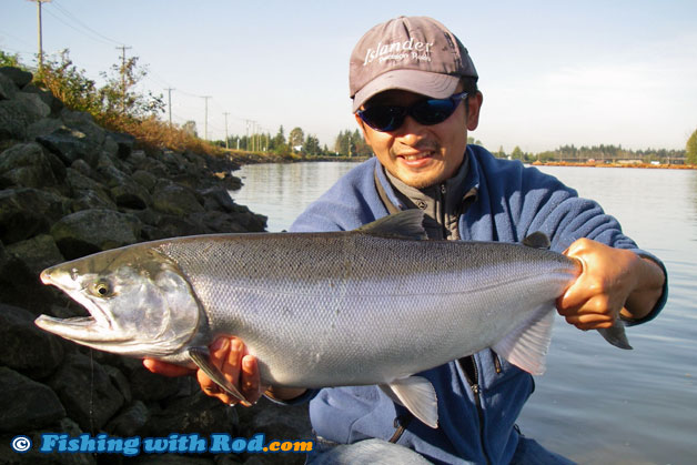 Tidal fraser river fall salmon fishery fishing with rod for Best bait for salmon fishing in the river