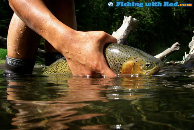 Catch And Release Fishing In Bc Fishing With Rod