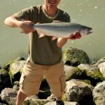 Fraser River pink salmon