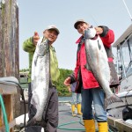 Chinook Salmon in Ucluelet