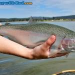 Tunkwa Lake rainbow trout