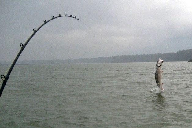 Prestige sportfishing winter update fishing with rod for Fraser river fishing